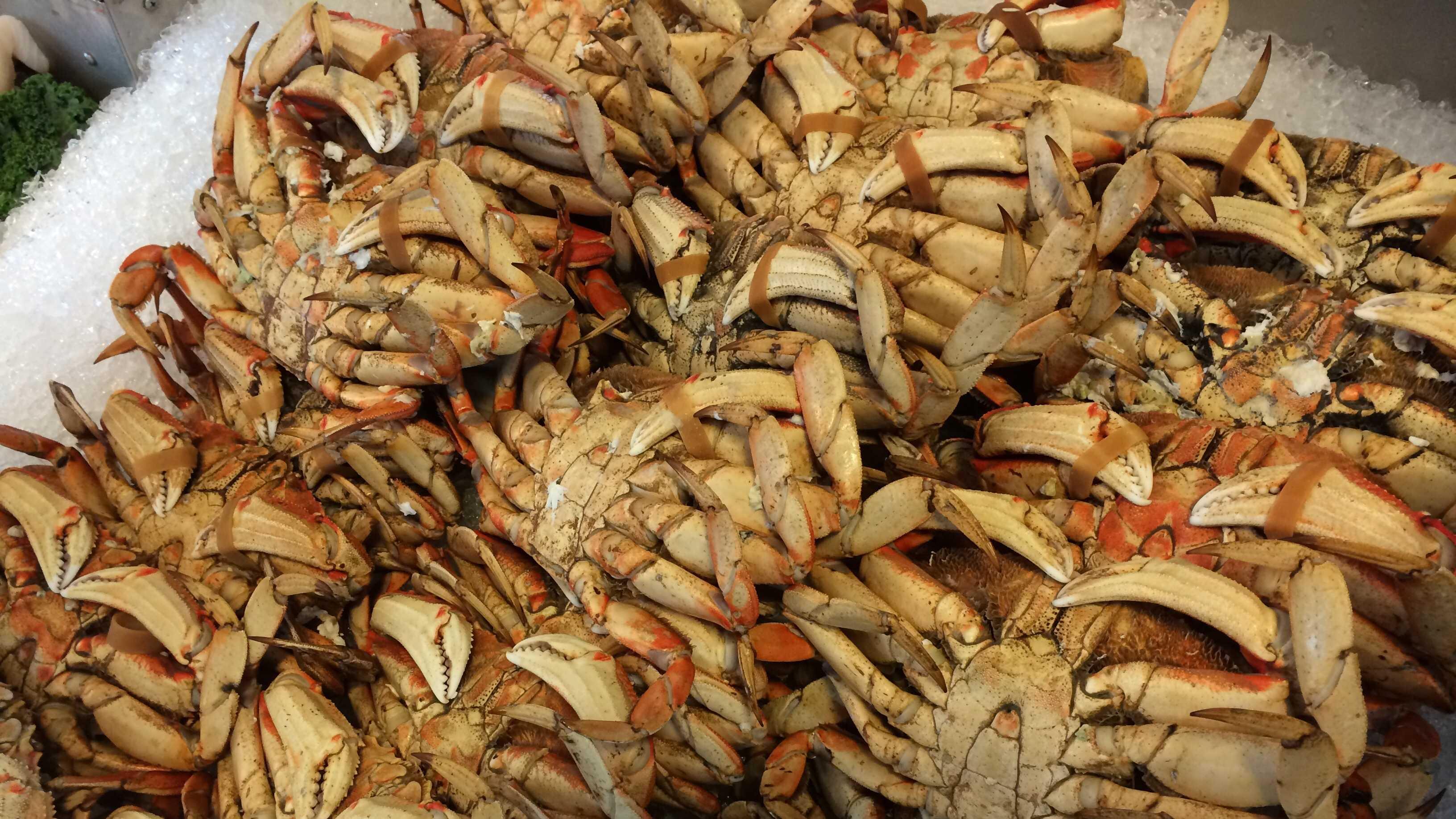 crabs.jpg (1)