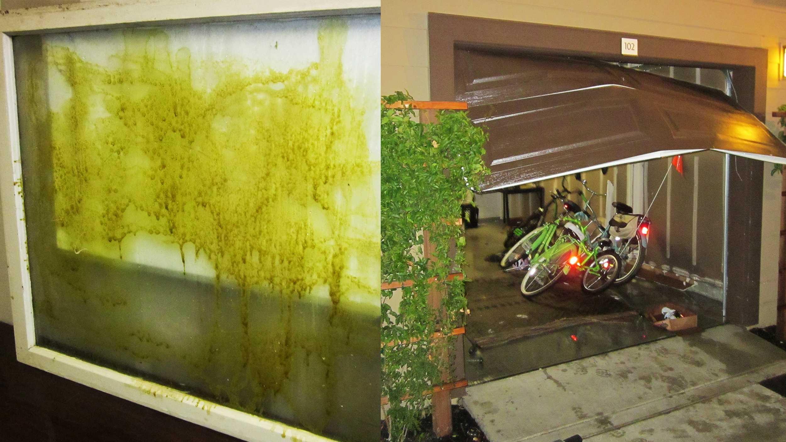 Santa Cruz hash oil lab