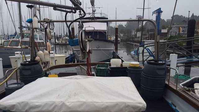 No Dungeness crab available for Christmas