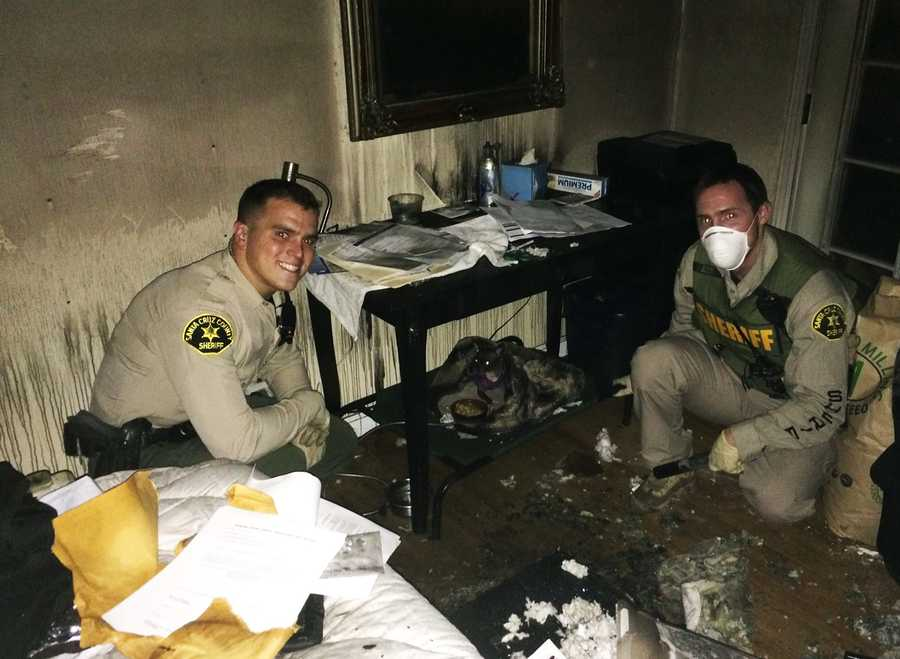 Deputies rescued dogs from the burning Aptos house, including this Chihuahua.