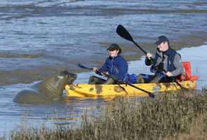 The 26-hour elephant seal standoff ended Tuesday afternoon when animal experts coaxed the 900-pound beast to waddle out of the water and tranquilized it.