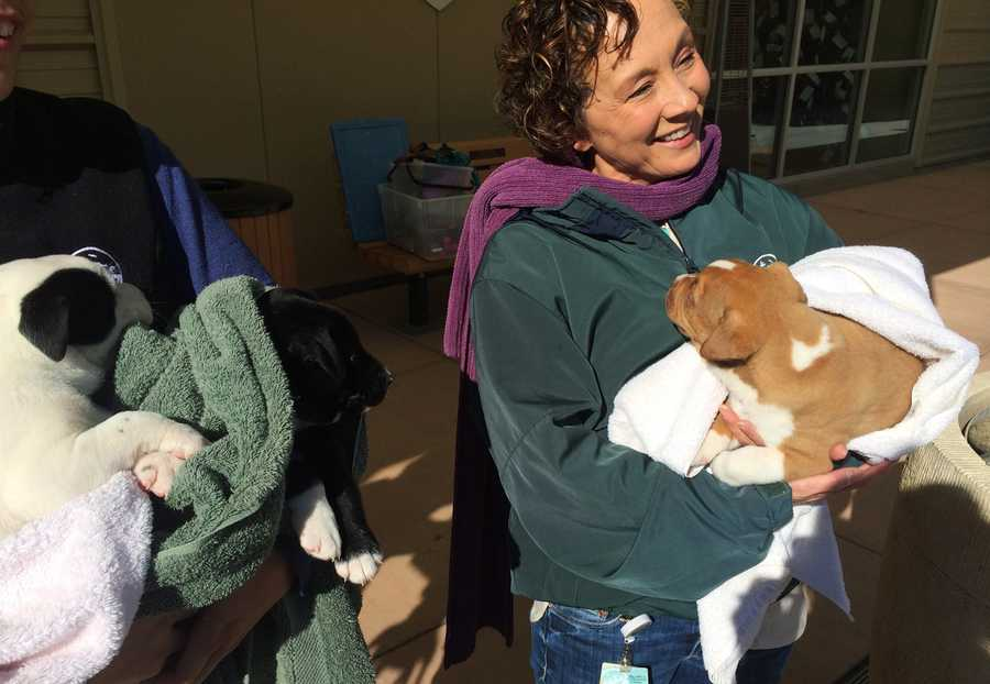 Officers attempted to reunite the remaining three puppies with their mother, but the owner was uncooperative. The remaining puppies were taken from the man and are now safe at the SPCA.