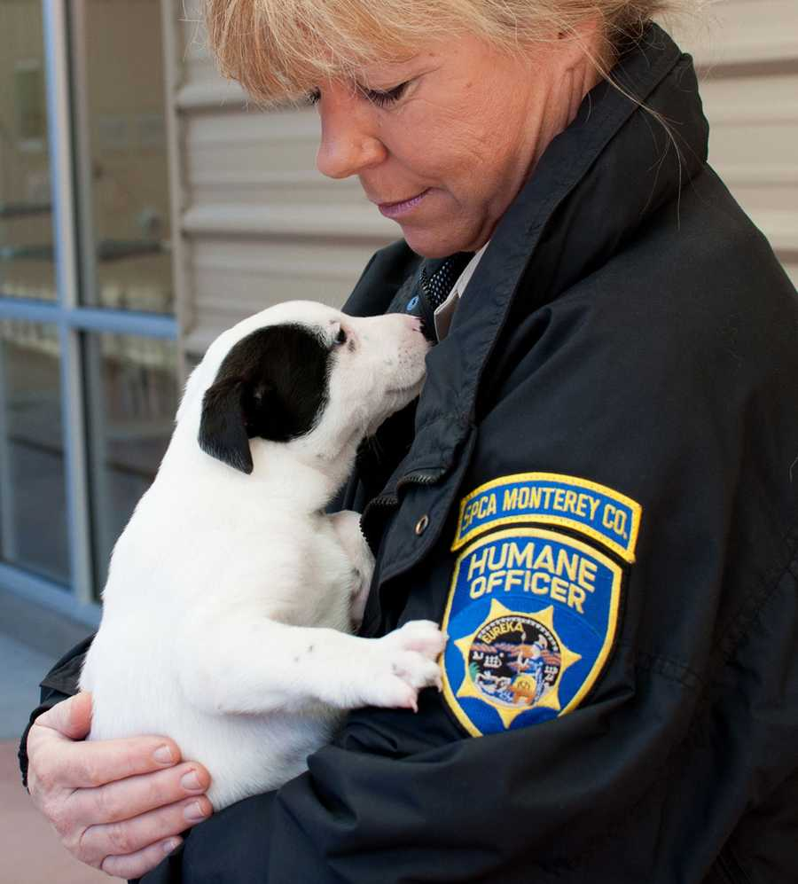 SPCA officials described the puppy seller as a transient white man with dark brown hair in his late 20s who frequents the area.