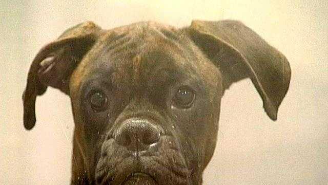 Dog Generic - 17937565