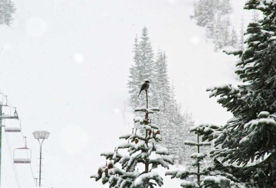 Saugstad was with three groups of skiers on the back side of Stevens Pass when the avalanche hit. Stevens Pass is in the Cascade Mountains, about 80 miles northeast of Seattle.