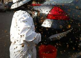 The bees became riled up and stung a KSBW producer who was shooting photos for KSBW.com several times.