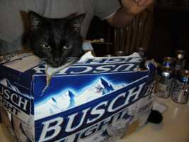 Fans of Busch had no particular party identity, according to the study.