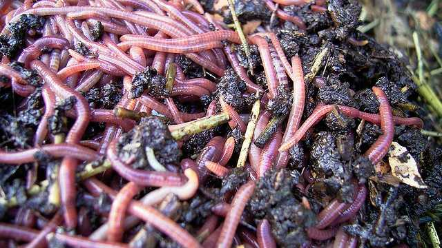 Helmintophobia is the fear of being infested with worms.