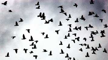 Ornithophobia is the fear of birds.