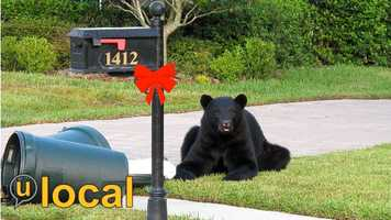 Take a peek at the 50 highest-rated bear photos on WESH.com's u local section.