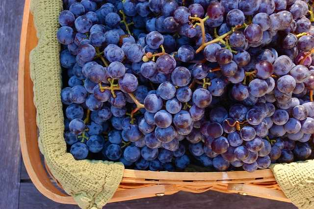 27. Grapes are known to increase brain function, pack as a healthy snack!