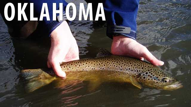 Oklahoma:It is against the law to use a yo-yo to go fishing in the state of Oklahoma. (Source: Distractify)