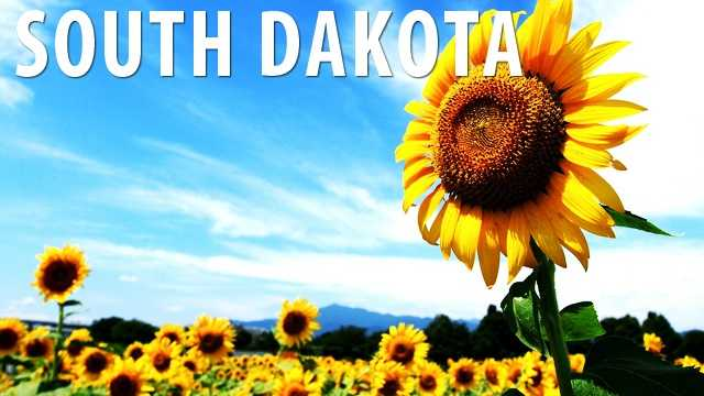 South Dakota:As long as fireworks are not being used within 600 feet of an occupied home, a farmer may set them off to protect their sunflower crops from crows and other birds. (Source: Business Insider)