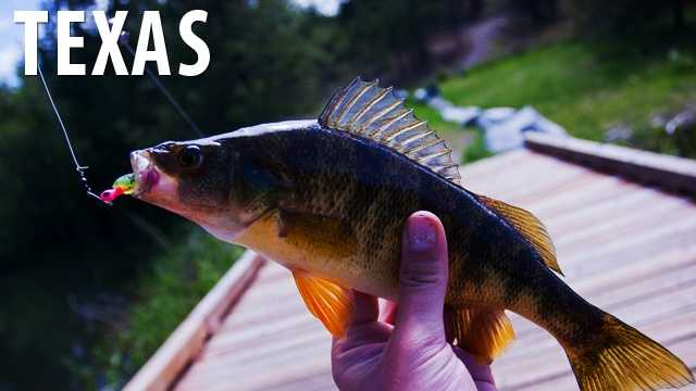 Texas:In Texas it is illegal to fish from a bridge, however you are perfectly fine fishing from any other location. (Source: Distractify)