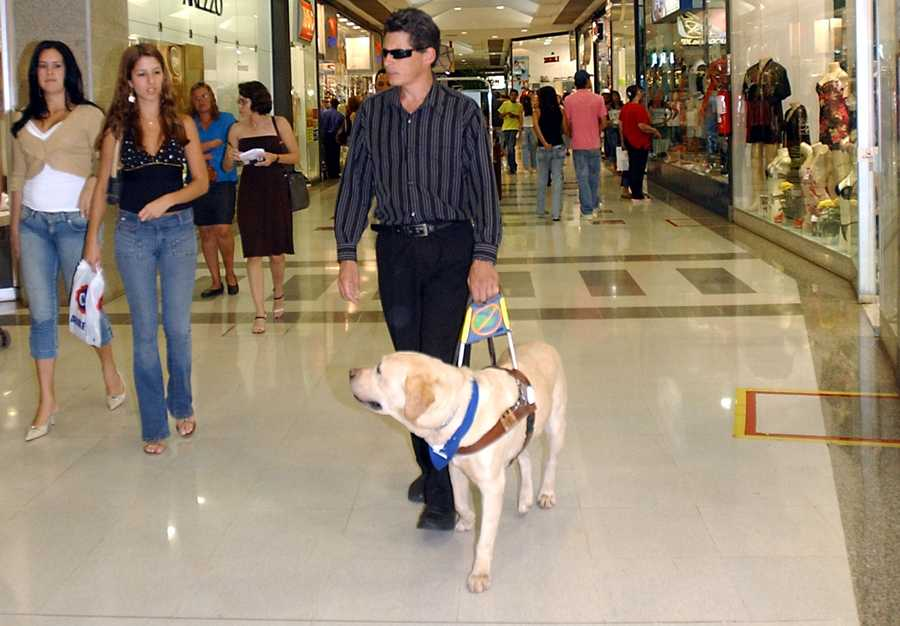 Seeing eyes dogs are trained to go to the bathroom on command so that their owner will have no issues cleaning up after them. (Source: barkpost.com)