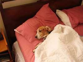 45% of dog owners have reported letting their dogs sleep in their bed with them. (Source: petfinder.com)
