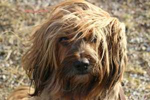 Never shave your dog down to the skin in winter, as a longer coat will provide more warmth. Own a short-haired breed? Consider getting him a coat or sweater.