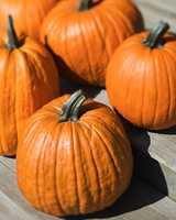 Great Gourds Halloween wouldn't be the same without pumpkins, and thankfully, there are plenty of gourds to go around. According to the United States Department of Agriculture's National Agricultural Statistics Service, in 2010, the top pumpkin-producing states?Illinois, California, New York and Ohio?produced 1.1 billion pounds of pumpkins.