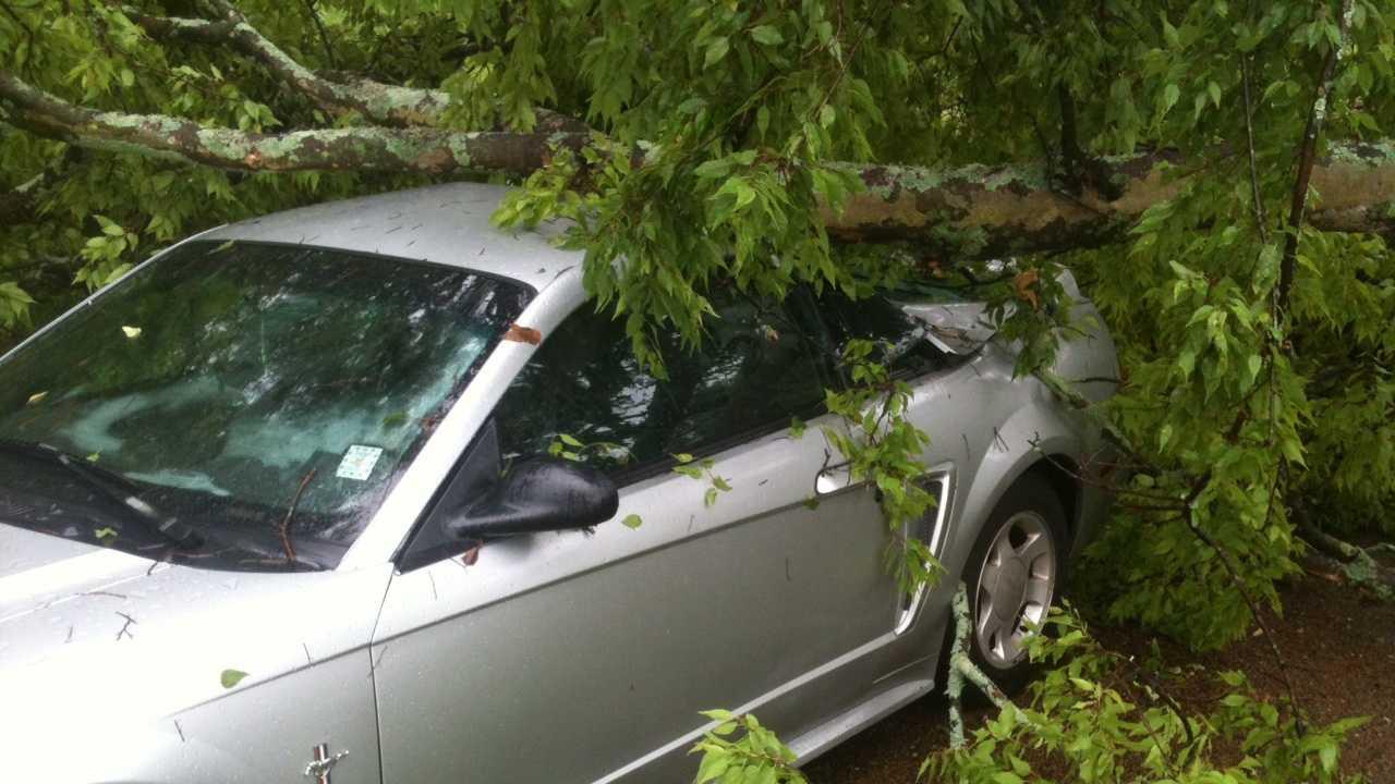 A tree fell on top of a car on Peach Street.