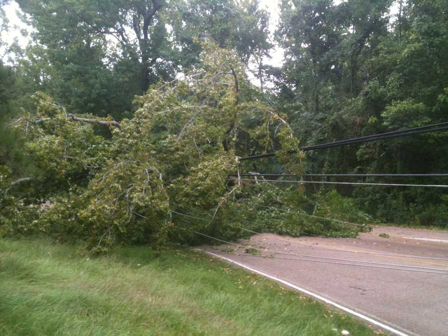 The storm caused a tree to fall Wednesday across McDowell Road Extended in Jackson.