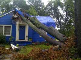 A tree fell on a house on Prentiss Street and Robinson Road in Jackson.