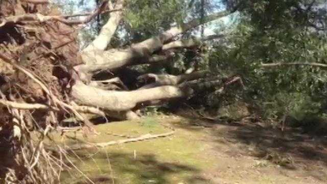 A huge tree was uprooted by the storm in Lake.