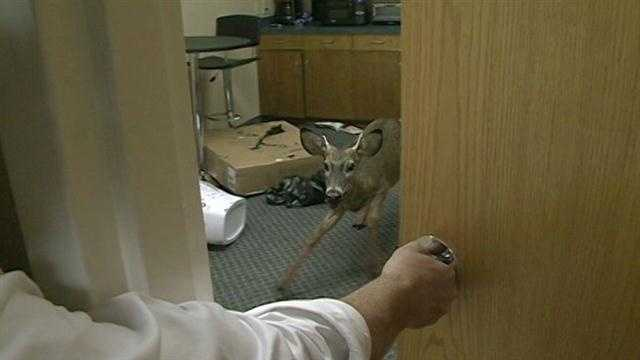 Deer inside building 4