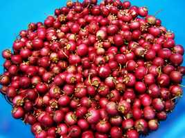 Cranberries are a holiday classic. But for some, it's the last thing that goes on the table -- as it slides out of a can.