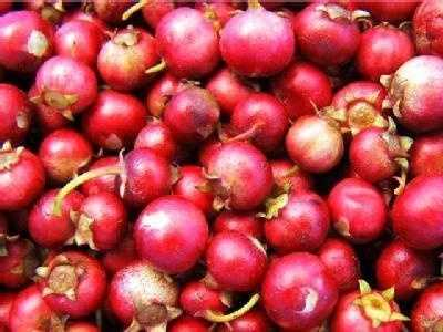 But did you know that cranberries -- the actual berries, not the canned version -- were probably served during the first Thanksgiving meal? Cranberries are one of three fruits native to North America, according to CranberryFarmers.org. The others are Concord grapes and blueberries.