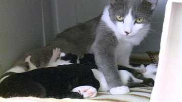 Mama cat nurses puppy along with kittens. Click here to read the story and watch the video.