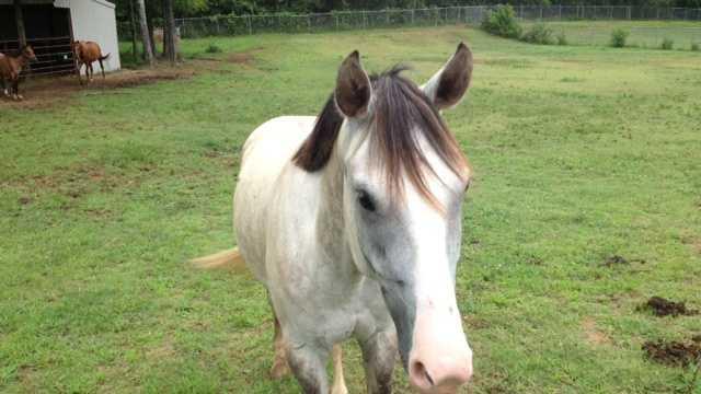 horse neglect 1.jpg