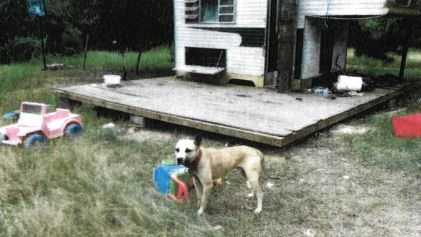 Simpson County dog