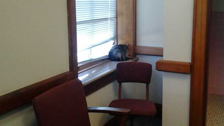 court room raccoon