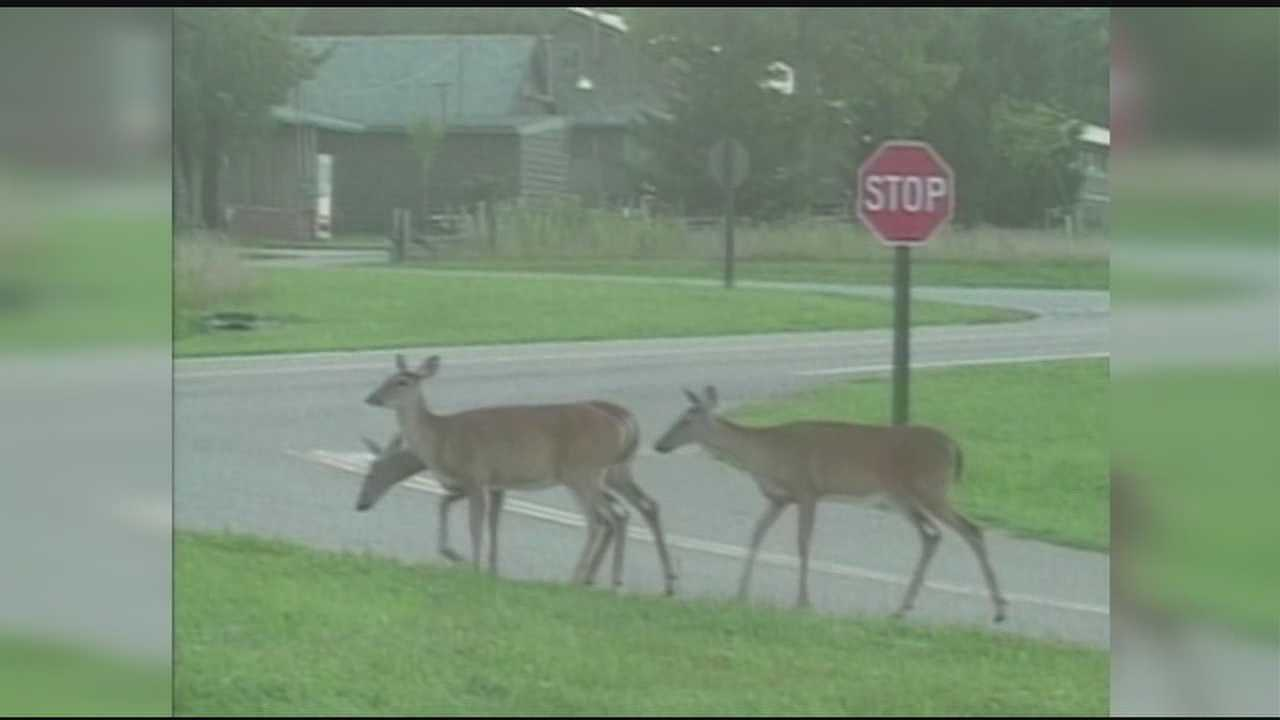 Mississippi wildlife leaders admit there's a problem with an overpopulation of deer.