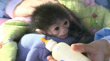 You can see Jari weekdays at 11 a.m. at the vet hospital during her mid-day feeding at the Jackson Zoo.