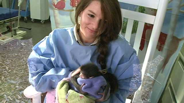 A vet tech at the zoo is acting as a surrogate mom along with zookeepers that take care of the gibbons.
