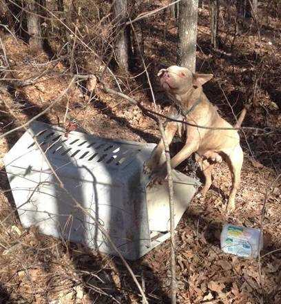 A fourth pit bull was found Thursday tied to a tree near 141 Bee Summers Road.