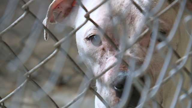 One of two dogs taken from a Holmes County home following the fatal mauling of a 3-year-old boy.