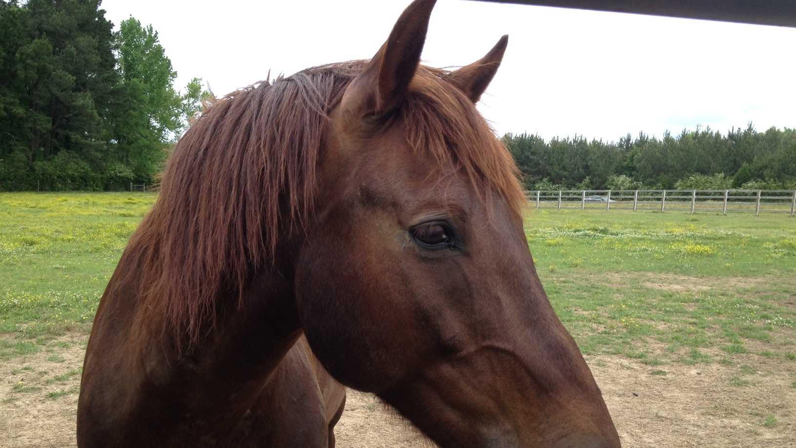 wild horses 1.JPG