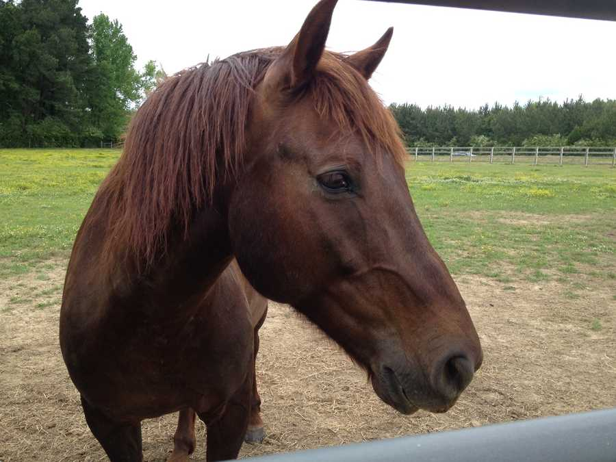 Wild horses from the western part of the U.S. are housed at a facility in Rankin County.