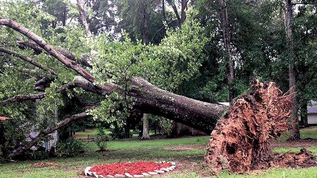 Uprooted tree falls on house during storm