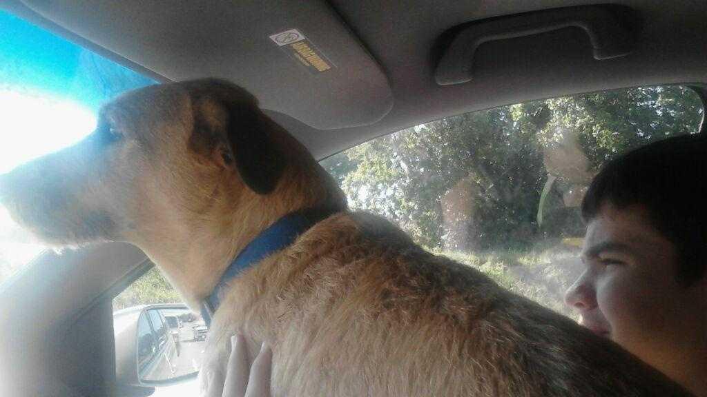 Missing dog winston 1