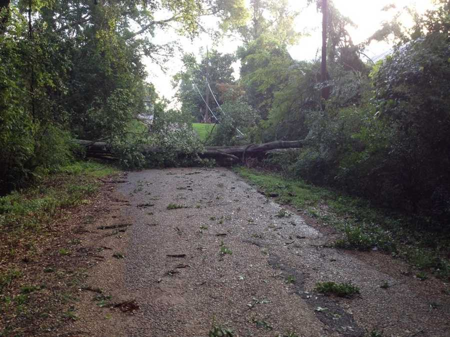 A tree down in Wesson.