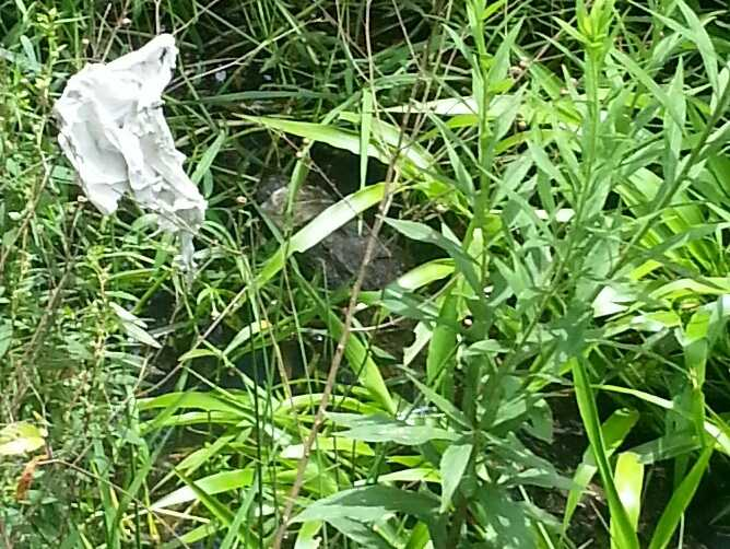 A Brookhaven public works crew made a frightening discovery while cleaning a ditch.
