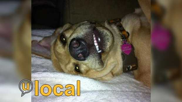 Do you think your dog is a winner? Share your pictures with u local!