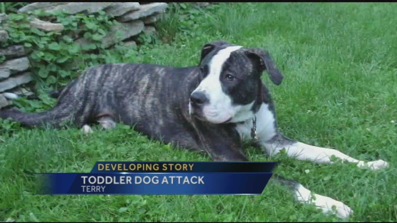 A family is  forced to put-down their dog,