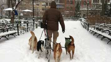 Keep your pets inside when temperatures drop below freezing. Never leave your dog or cat alone in a car during cold weather. A car can act as a refrigerator, holding the cold in and causing the animal to freeze to death.