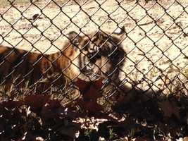 The Jackson Zoo is preparing the animals for a stretch of subfreezing weather.