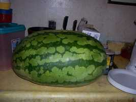 "Enjoy a Smith County watermelon. ""Nothing like a good ole Smith County watermelon in the summertime."""