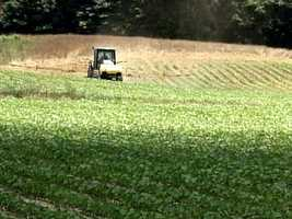 Visit Bolton and Edwards during crop harvest season.